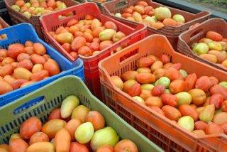 tomates_3.jpg